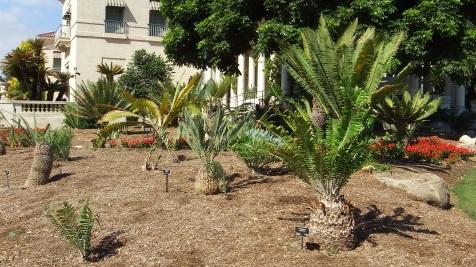 Huntington Cycad Garden DSCF7522