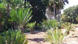 Huntington Cycad Garden DSCF7526