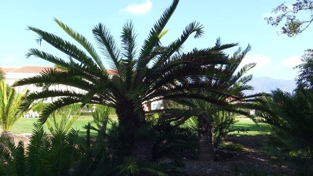 Huntington Cycad Garden DSCF7531