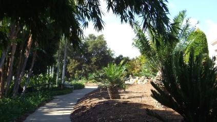 Huntington Cycad Garden DSCF7533