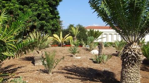 Huntington Cycad Garden DSCF7537