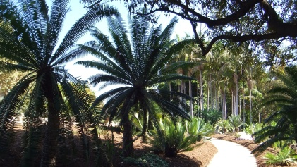 Huntington Cycad Garden DSCF7648