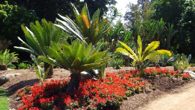 Huntington Cycad Garden DSCF7772a
