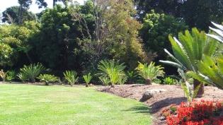 Huntington Cycad Garden DSCF7773