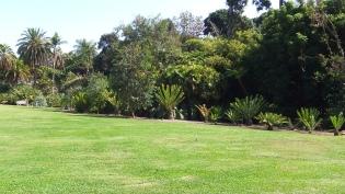 Huntington Cycad Garden DSCF7774