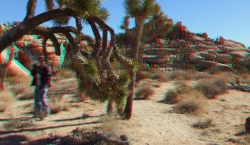 Joshua Tree NP Favorites 1 3DA 1080p DSCF0116