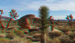 Joshua Tree NP Favorites 1 3DA 1080p DSCF7504
