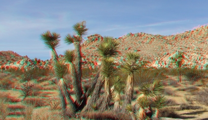 Joshua Tree NP Favorites 2 3DA 1080p DSCF1791