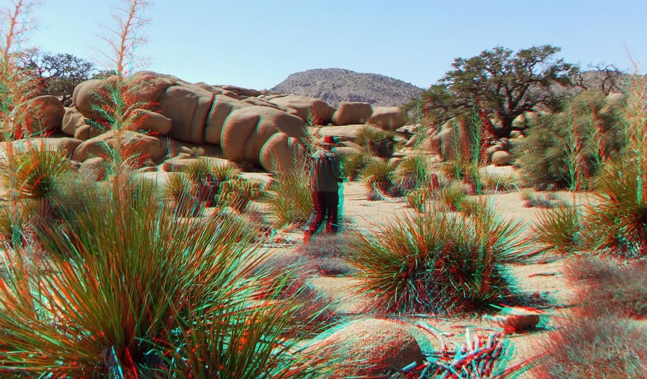 Joshua Tree NP Favorites 3 3DA 1080p DSCF3940
