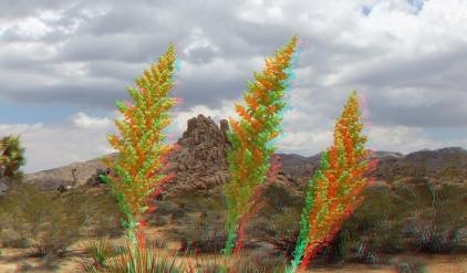 Joshua Tree NP Favorites 3 3DA 1080p DSCF8923