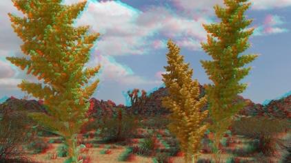 Joshua Tree NP Favorites 3 3DA 1080p DSCF8928