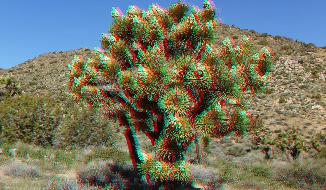 joshua tree np favorites 4 3da 1080p dscf3538