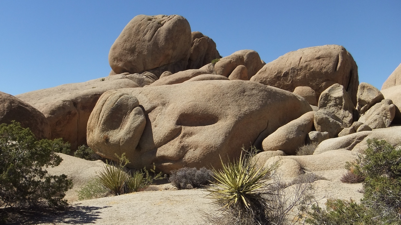 Funny Face, Jumbo Rocks Loop Trail