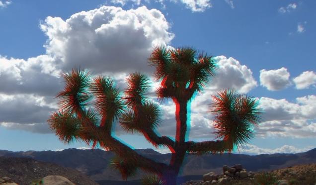 Joshua Tree NP Favorites 7 3DA 1080p DSCF1855