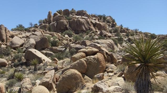 Joshua Tree NP Desert Queen Mine DSCF9536